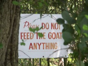 swrgoatsign-copy